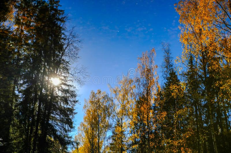 Beautiful trees reflections in the water in the Pavlovsk park`s pond. Autumn on a sunny day with blue sky stock image