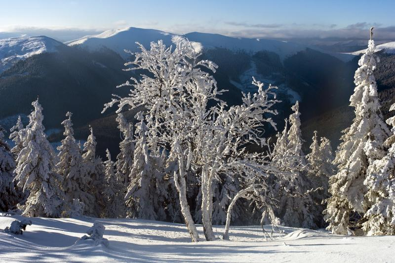 Bright winter day in the mountains royalty free stock photo