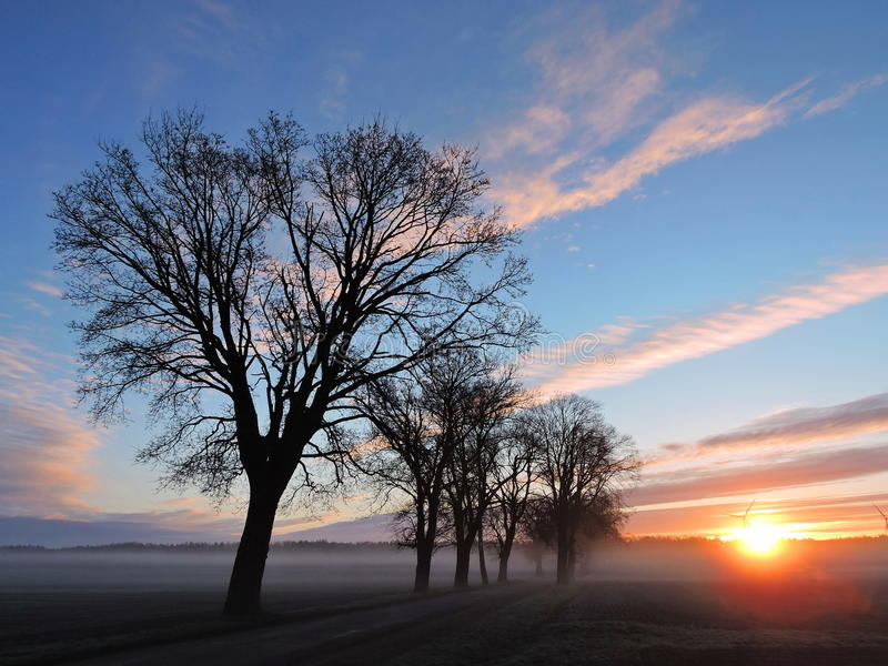 Beautiful trees in sunrise, Lithuania royalty free stock photos