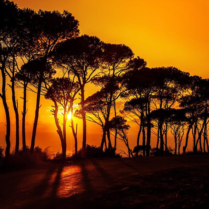 Beautiful trees on sunset royalty free stock image