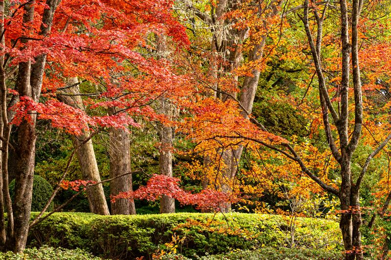 Beautiful trees in various colours in Autumn stock images