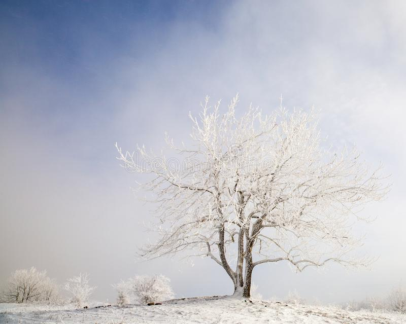 Beautiful trees in winter frost royalty free stock photography