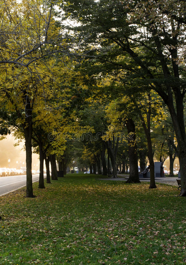 Trees with yellow leaves. At Autumn in Back Bay, Boston, MA stock photo