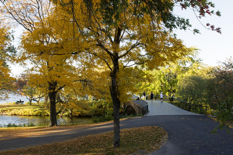 Beautiful trees with yellow leaves. At Autumn at Charles River, Boston, MA stock image