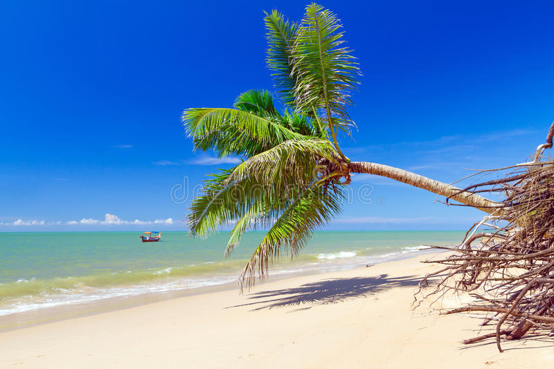 Download Beautiful Tropical Beach With Coconut Palm Tree Stock Image - Image: 29629957