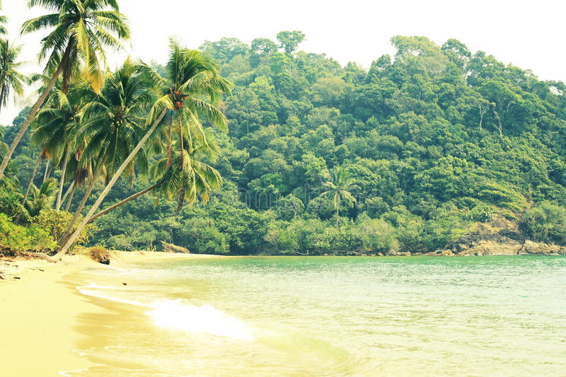 Download Tropical beach stock photo. Image of nature, palm, comfort - 29856286