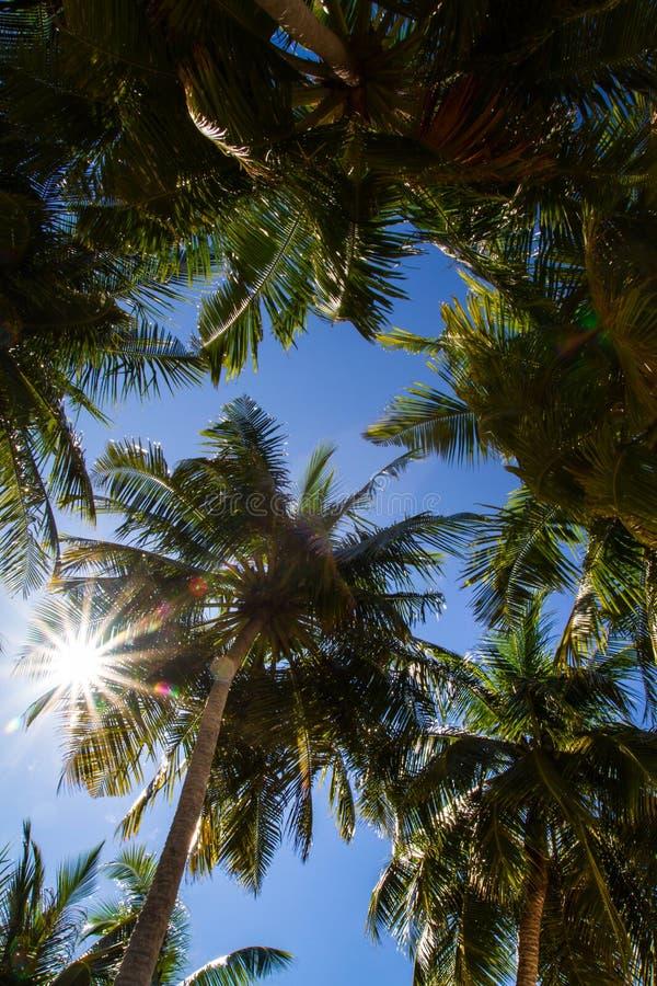 Beautiful tropical beach in Maldives stock photos