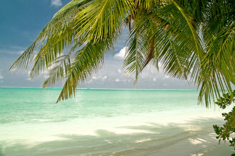Download Beautiful Tropical Beach On A Maldivian Island Stock Photo - Image: 8383802