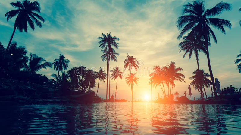 Beautiful tropical beach with palm trees silhouettes at dusk. Nature. stock photo