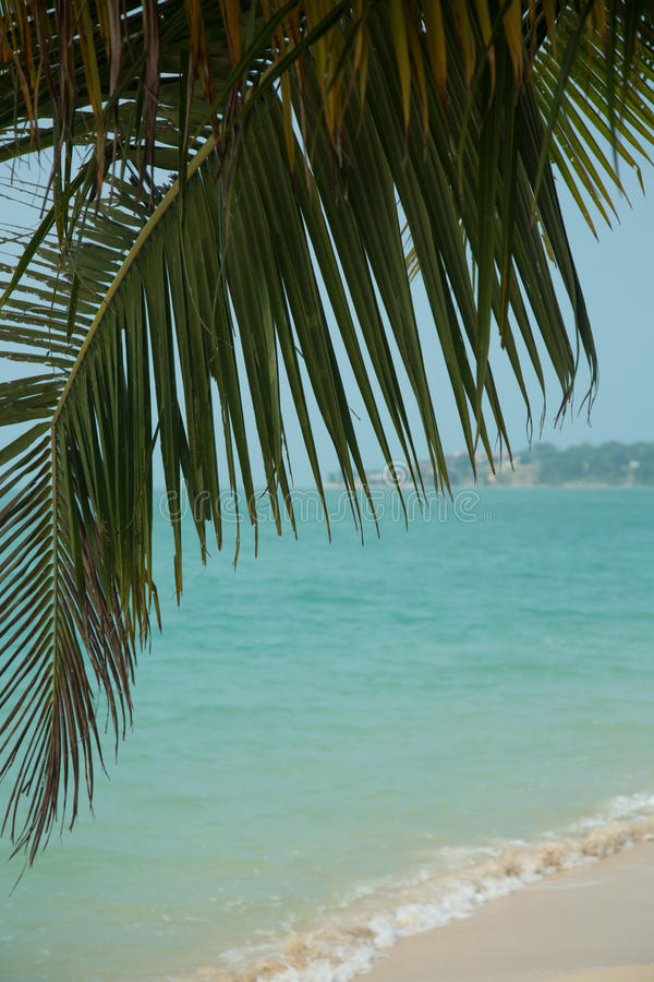 Download Beautiful Tropical Beach With Palm Trees Stock Photo - Image: 36795460