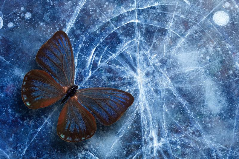 Beautiful tropical butterfly sits on the ice with cracks. template for design royalty free stock image
