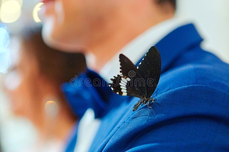 Beautiful tropical butterfly sitting on the groom`s suit royalty free stock photos