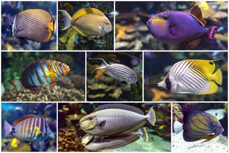 Beautiful tropical coral fish, coral - set - collage stock photo