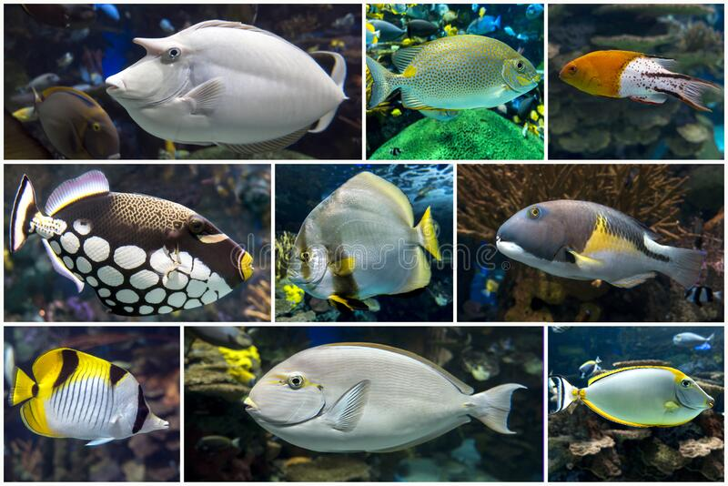 Beautiful tropical coral fish, coral - set - collage royalty free stock photos