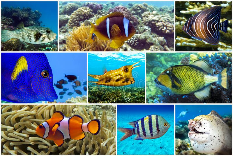 Beautiful tropical coral fish, coral - set - collage stock photos