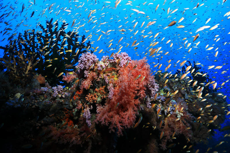 Beautiful tropical coral reef royalty free stock images