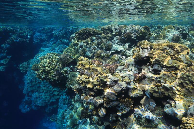 Tropical coral reef. Beautiful tropical coral reef underwater in the Red Sea royalty free stock photo