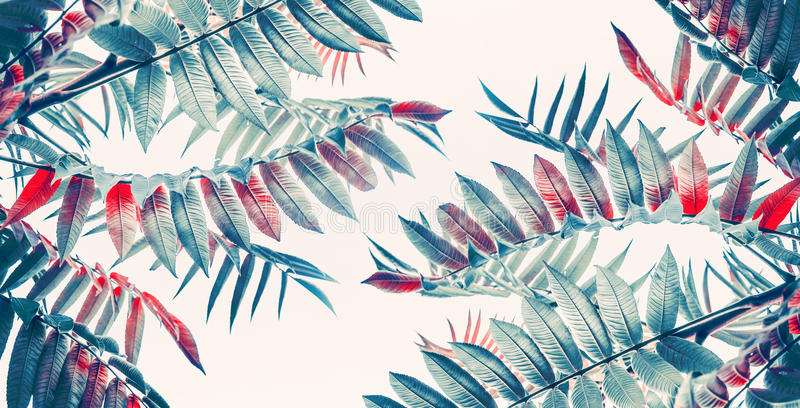Beautiful tropical or dschungel leaves background royalty free stock images