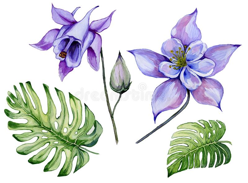 Beautiful tropical floral set blue and purple aquilegia, bud and monstera leaves. Colorful columbine flower and exotic leaves. royalty free illustration