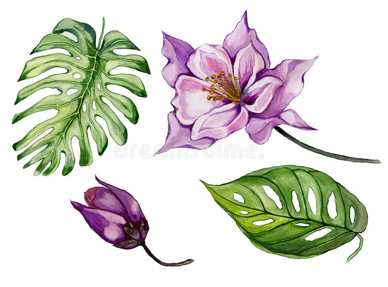 Beautiful tropical floral set purple aquilegia, bud and leaves. Colorful columbine flower and green leaves isolated. Beautiful tropical floral set purple stock illustration