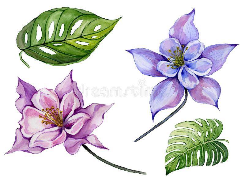 Beautiful tropical floral set purple and blue aquilegia, large tropical leaves. Colorful columbine flower and green leaves. royalty free illustration