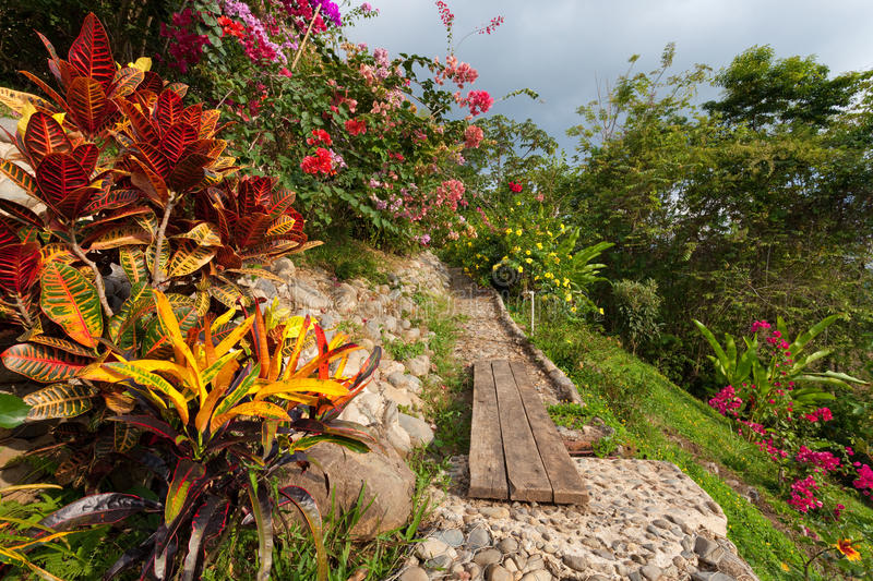Download Beautiful Tropical Garden stock image. Image of stone - 24762609