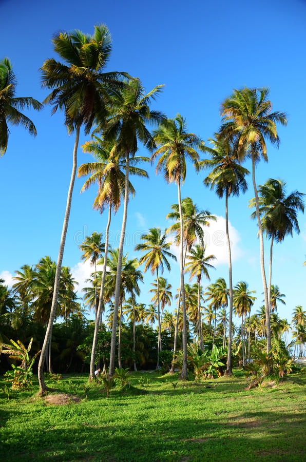 Beautiful tropical garden with palm trees in luxury carribean re stock images