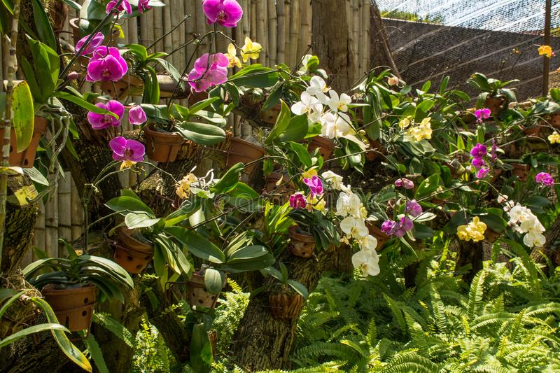 Beautiful tropical garden with vibrant colourful orchid flowers stock photography
