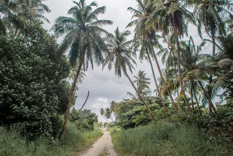 Beautiful tropical jungles landscape with sandy trail royalty free stock photography