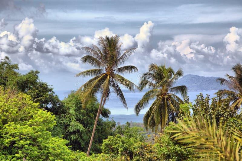 Beautiful tropical landscape stock image