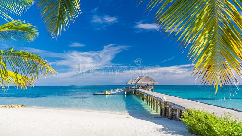Beautiful tropical landscape. Maldives island beach and palm trees. Perfect tropical banner royalty free stock image