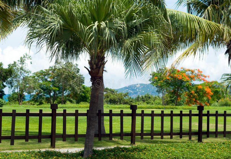 Beautiful tropical landscaping with Palm trees and flowers. royalty free stock photo