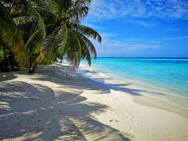 Tropical Maldives beach with coconut palm trees and blue sky. royalty free stock images