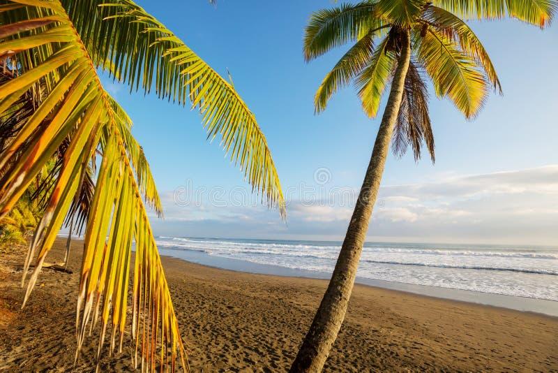 Coast in Costa Rica. Beautiful tropical Pacific Ocean coast in Costa Rica royalty free stock photo