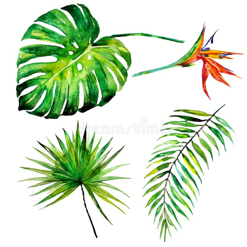 Beautiful tropical palm leaves and flowers, watercolor. Beautiful tropical palm green leaves and flowers, watercolor on white royalty free illustration