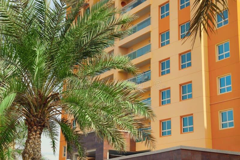 Beautiful tropical palm near multi-storey building. Beautiful tropical palm near multi-storey hotel building stock photo