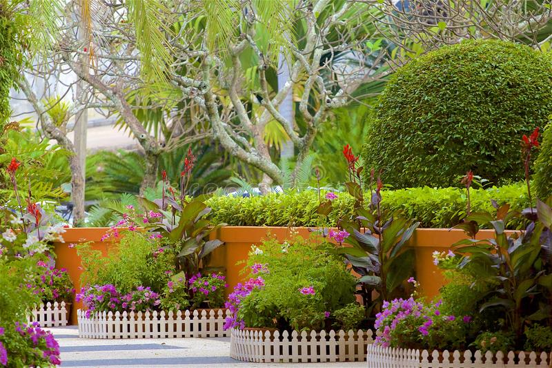 Tropical plants in Thailand. Beautiful Tropical plants in Thailand stock photo