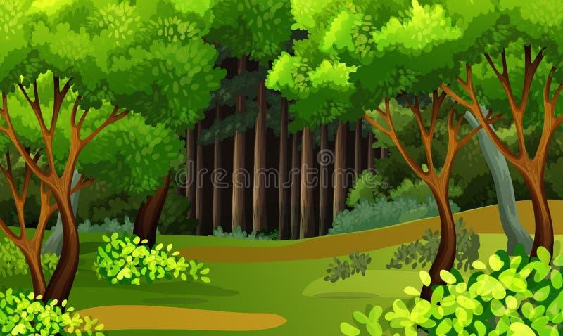 A Beautiful Tropical Rainforest Scene stock illustration