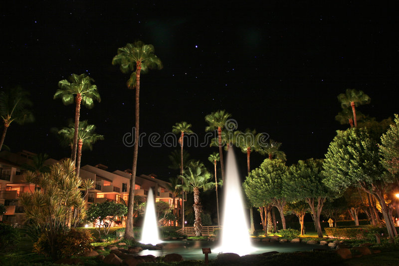 Beautiful tropical resort. Palm trees illuminated at night in a tropical resort royalty free stock image