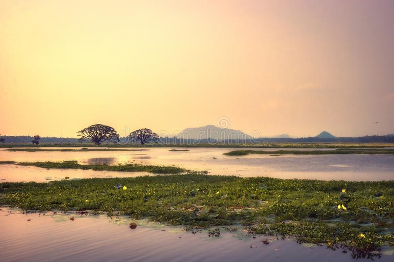 Beautiful tropical sunset scenery of Tissa Wewa lake with trees in the water nearby Tissamaharama wetland Sri Lanka. Beautiful tropical sunset scenery of Tissa royalty free stock images