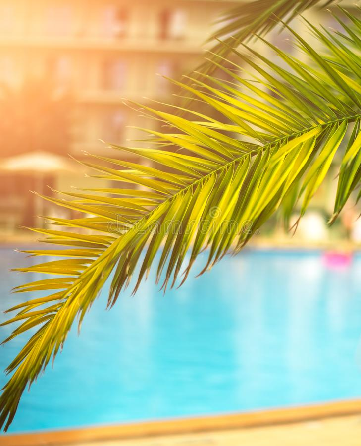 Beautiful tropical view of a branch with leaves of a palm tree against the backdrop of the water pool at the resort royalty free stock photo