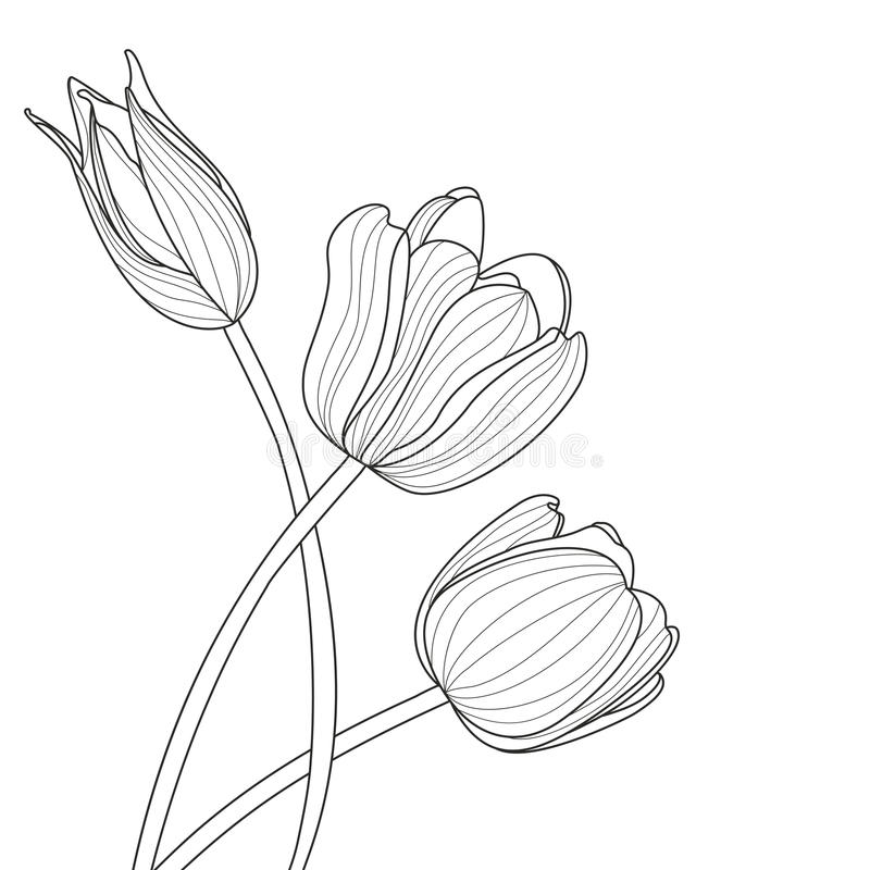 Beautiful tulip flowers line illustration. Vector abstract black and white floral background with place for text. royalty free illustration