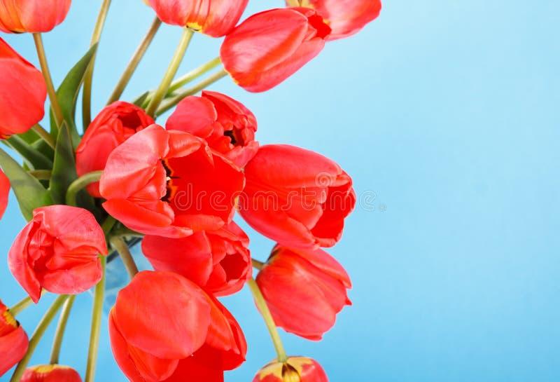 Download Beautiful tulips stock photo. Image of mothers, foliage - 14566364
