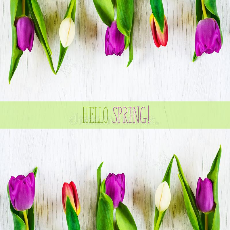 Beautiful tulips against white wooden background. The inscription Hello spring. Copy space. stock images