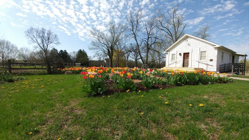 Tulips, White House, Beckman Mill, Beloit, WI stock photography