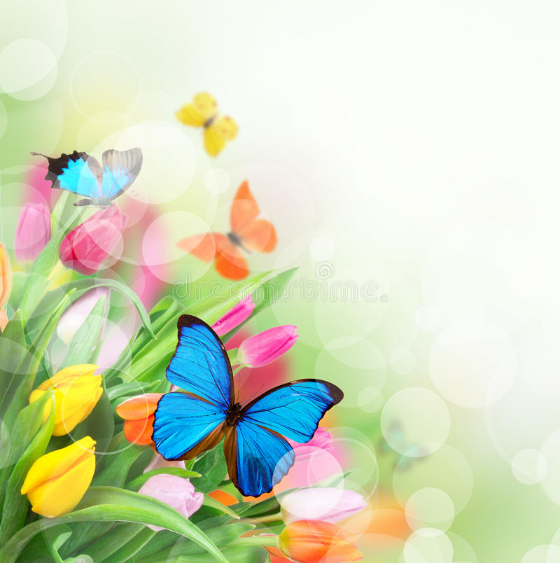 Beautiful tulips with exotic butterflies