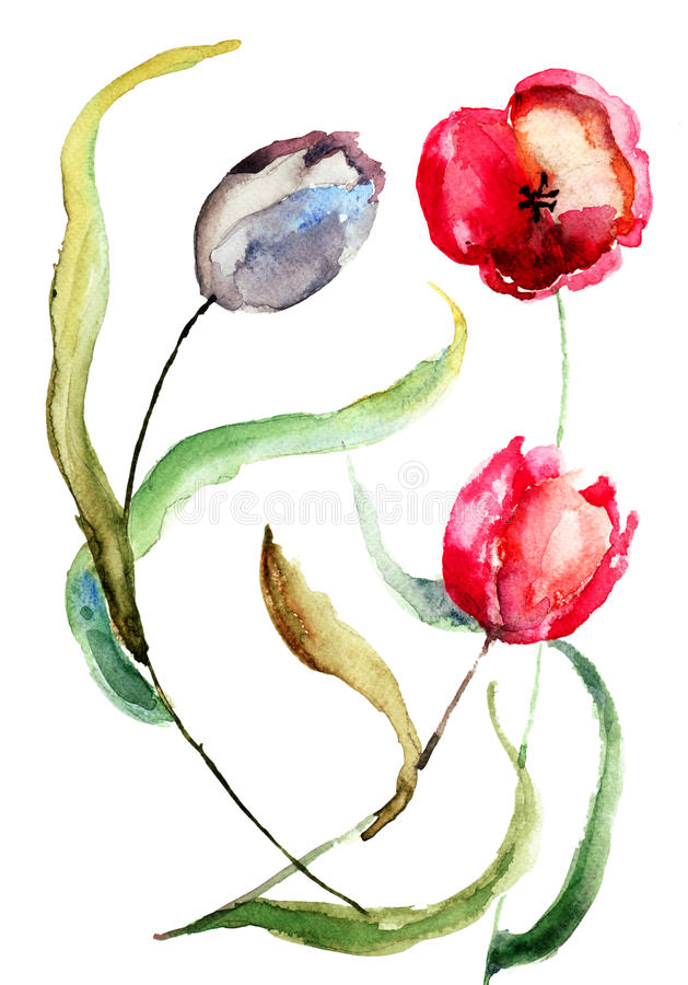 Beautiful Tulips flowers. Watercolor painting stock illustration