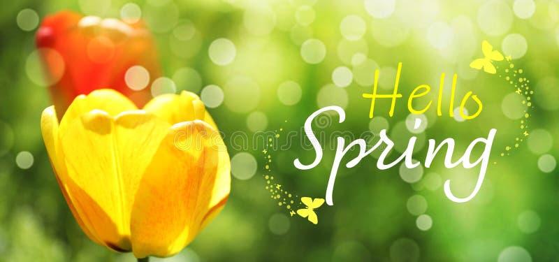 Beautiful tulips on background. Hello spring stock photo