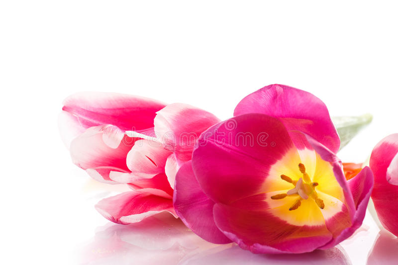 Download Beautiful tulips stock image. Image of card, mothers - 38720149