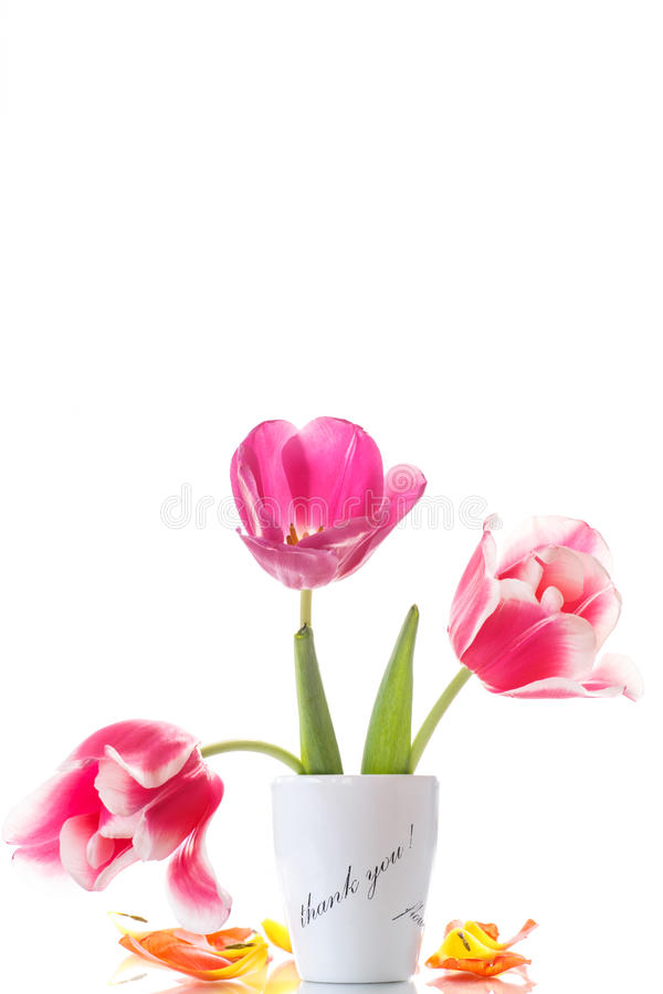 Download Beautiful Tulips In A Vase With Gratitude Stock Photo - Image: 38720128